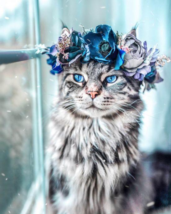 кошка в венке, день кота