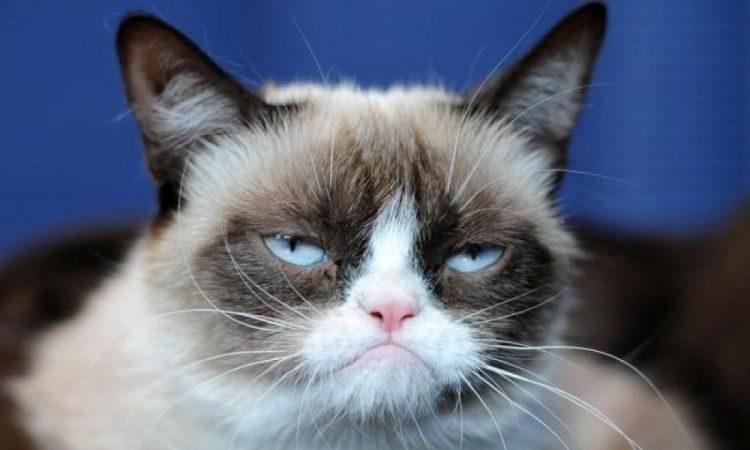 суровый кот, день кота