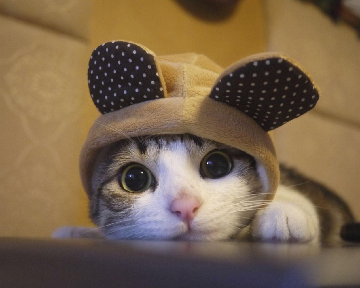 День кота — как хвостатые покорили мир и Instagram