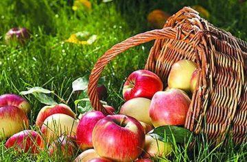 фишки дня, Яблочный Спас