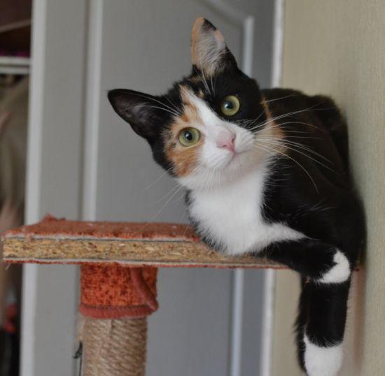 кошка Ириска, День кота