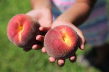 фишки дня, день сьешь персик США
