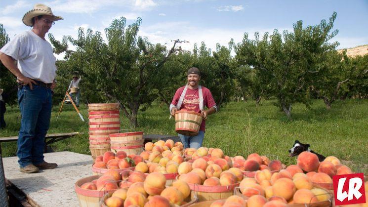 """фишки дня - 22 августа, день """"сьешь персик"""" в США"""