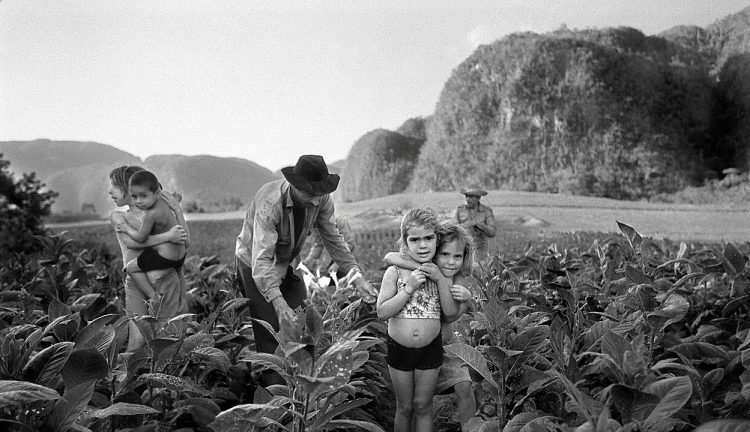 Куба, табак, плантации