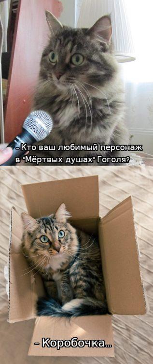 мэн дня, кот, коробочка, гоголь, мертвые души, юмор, прикол, фишки дня