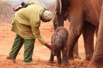 фишки дня, день слонов