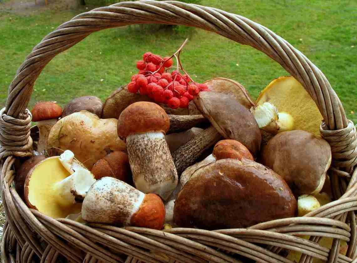 Грибы – вся польза для здоровья и как их собирать правильно