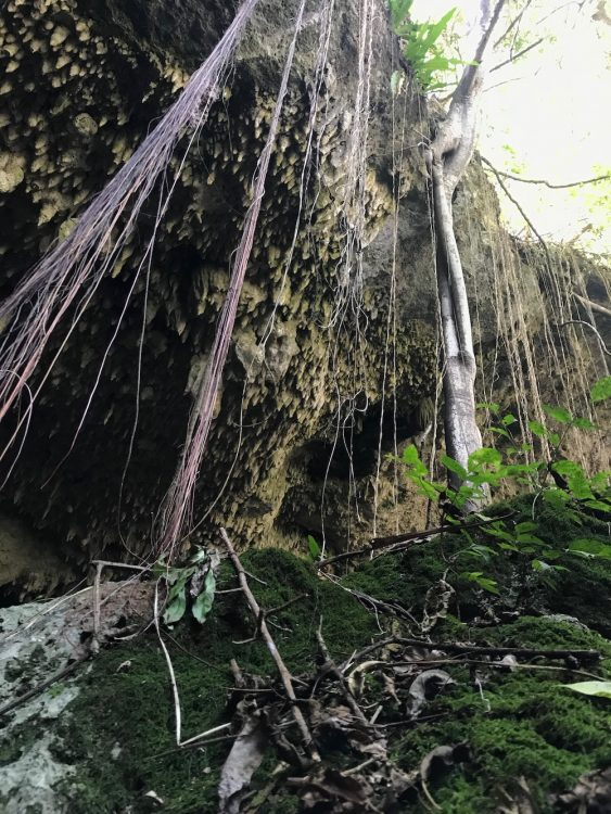 Варадеро, Куба, джунгли