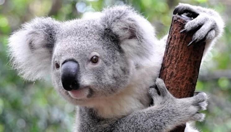 фишки дня - 7 сентября, день защиты животных Австралии