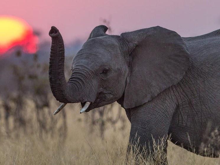 фишки дня - 22 сентября, День слонов