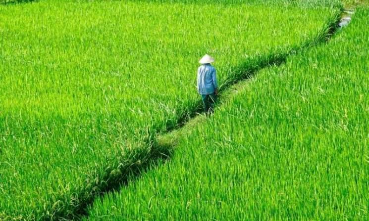 фишки дня - 20 сентября, День риса
