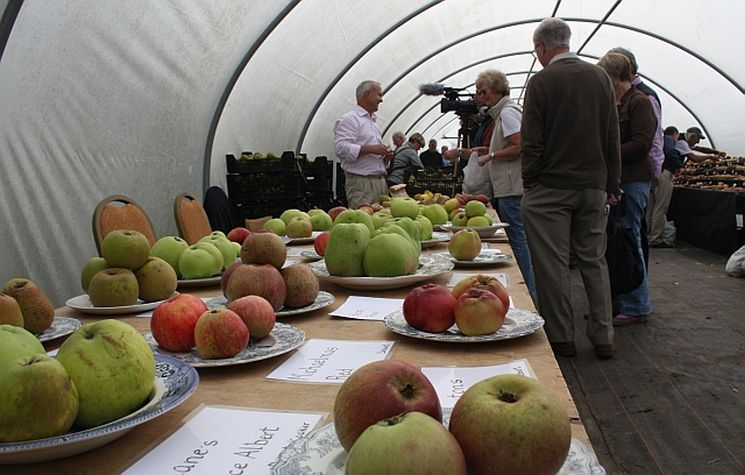 фишки дня - 21 октября, День яблок Англия