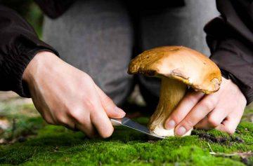 фишки дня, день грибов