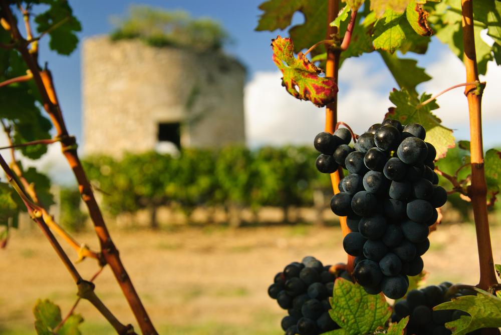 Бордо, Лучшие страны для отдыха, вино
