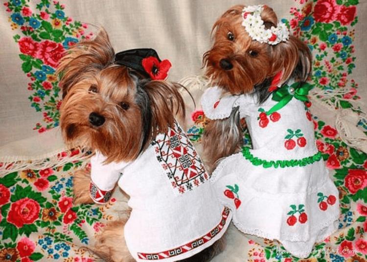 вышиванка, собаки