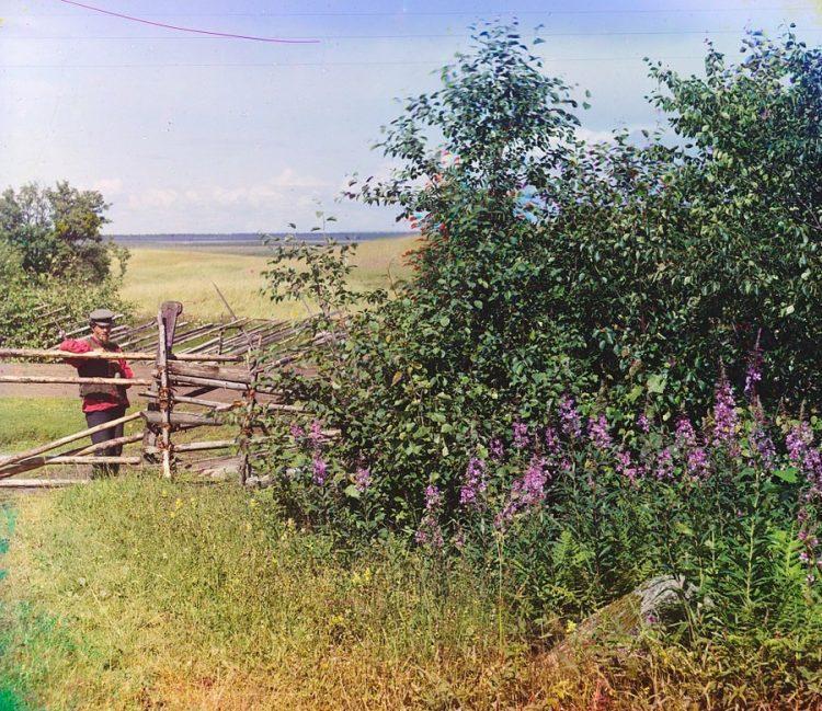 Деревня Палтога, Вологодская область