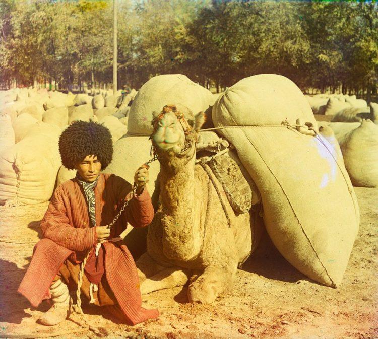 Доставка хлопка, верблюд, фотография, история, Мургабское имение