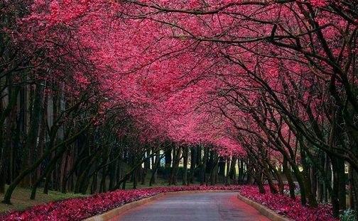 Киев, парк Киото